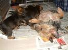 J 23.12.2008_58